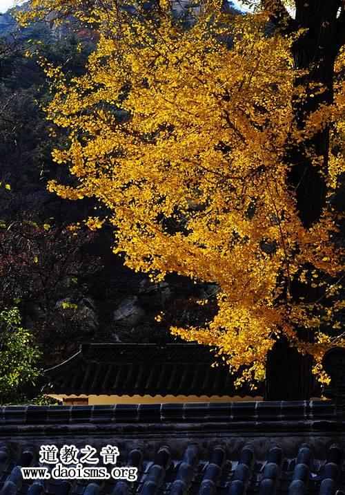 昆嵛山的秋天