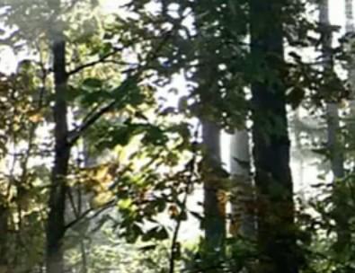 首届老子文化节宣传片——致敬老子—自然篇
