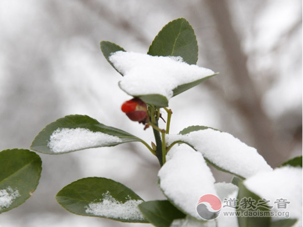 大雪纷飞时,道士家何在?