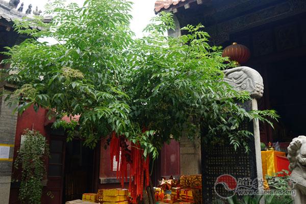 山东济南蓬莱院