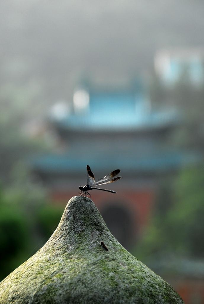 025优秀作品:息(摄影:董冬)