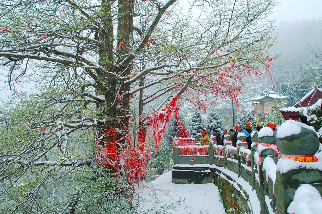 120摄影:南岩春雪(摄影:汤国祝)