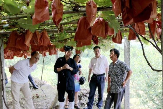 湖北省委统战部组织道教界人士开展扶贫工作