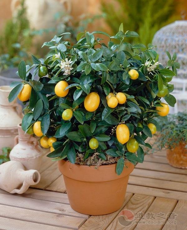 道家风水告诉你最易引来好风水的庭院植物