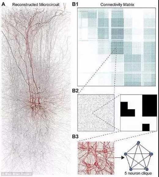 """研究人员使用一种叫做""""代数拓扑""""的数学模型,确定软件建立的虚拟大脑中的几何结构位置。为了测试该模型,研究人员在真实大脑组织上进行实验。 2015年蓝脑计划发表了首个大脑皮层的数字拷贝,研究人员首次利用代数拓扑的方式研究神经科学,揭示了大脑网络中具有多维几何结构的空间和宇宙,每个神经元以特定的方式与其他神经元连接,产生几何对象。当研究者对虚拟脑部组织施加刺激,会由越来越多的高维度的神经元簇临时组合起来,包围着高维空洞,即高维腔。大脑对刺激是通过建立然后抹除多维积木塔的方式做出反应,"""