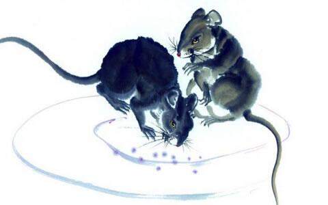属鼠2018年运势及运程 属鼠人2018年全年运势