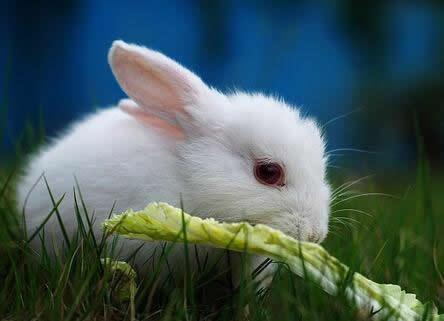 属兔人2018年整体运势及运程