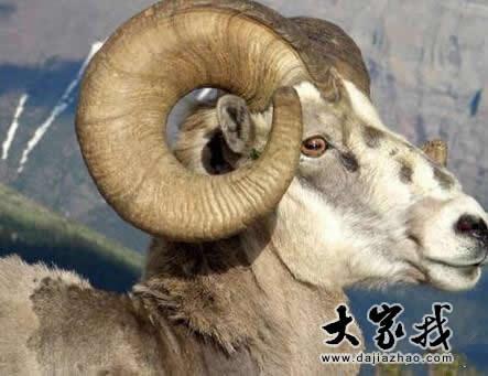 属羊2018年运势及运程 属羊人2018年全年运势