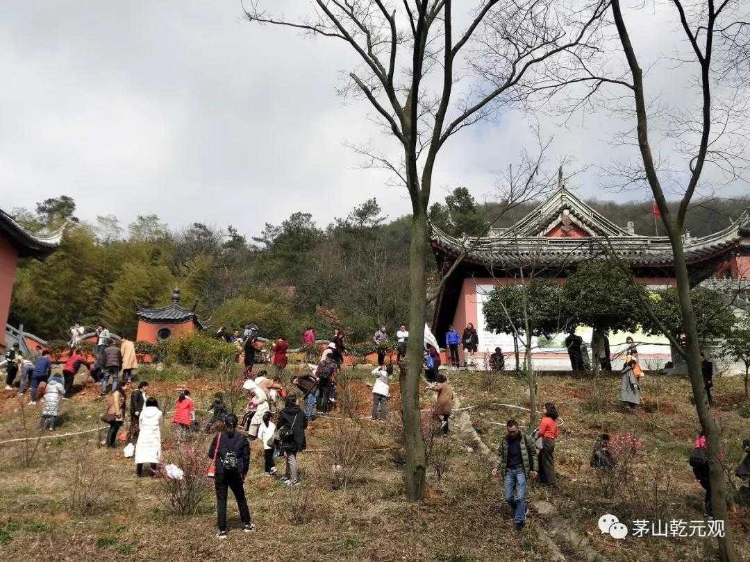 江苏茅山乾元观组织联合开展义务植树活动