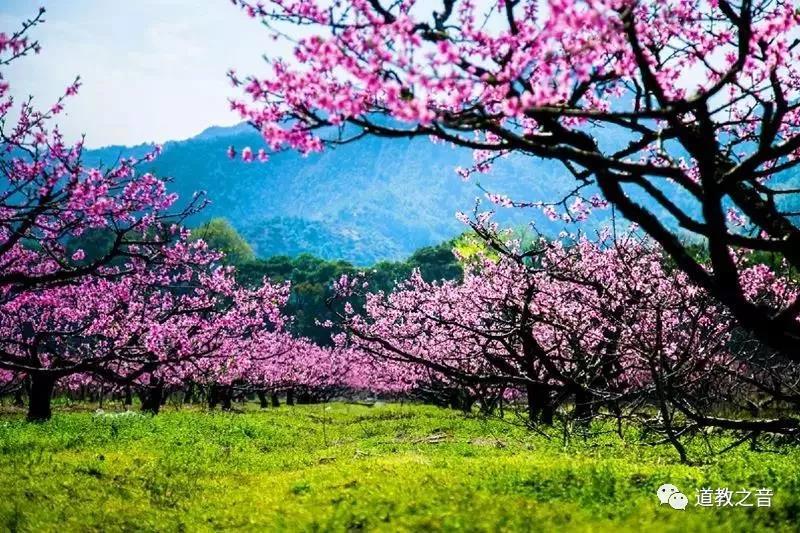 桃花开处仙气浓:修仙的你,莫负了好春光