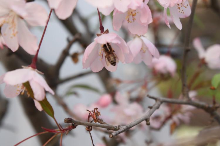 李宇林道長:春陽上升,順應節令以養生