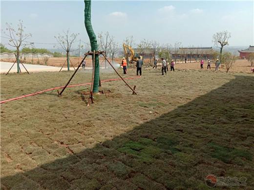 南京方山洞玄观开展春季绿化创建生态道观