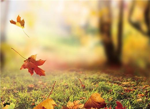 秋季气象——养生者必谨奉天时