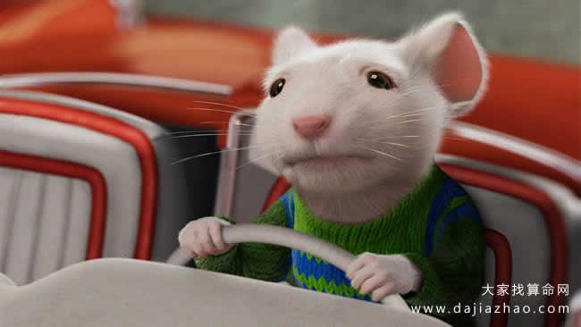 屬鼠2020年運勢及運程