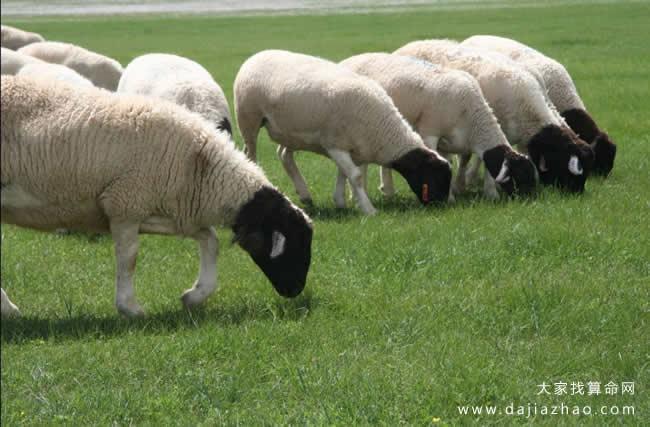 属羊人2021年运势及运程
