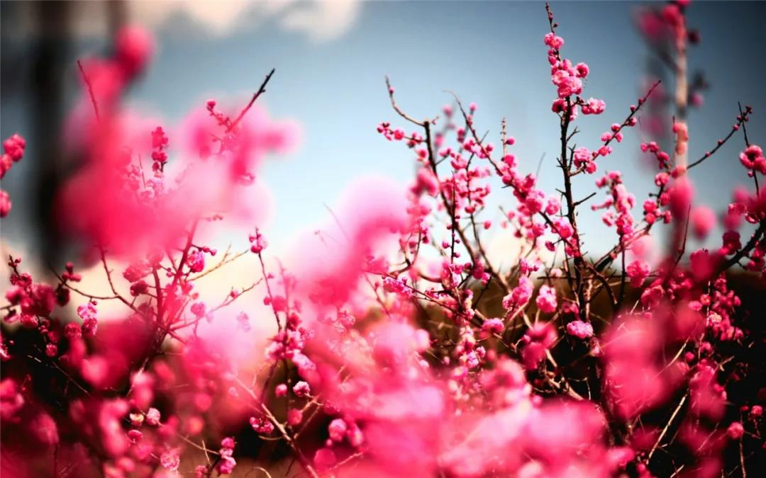 回眸一片是桃红:人间的桃花开了,人世的修行你做了吗?