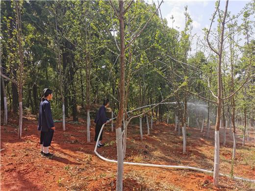 云南省道教协会联合黑龙潭公园开展护林活动